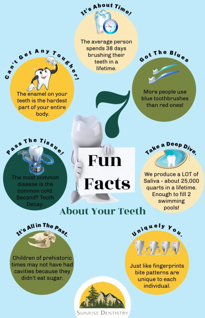 SD 7 Fun Facts About Your Teeth