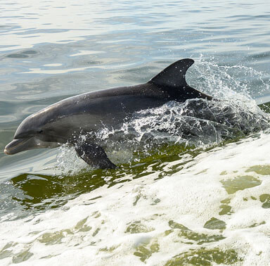 SPP Dolphins At The Sea