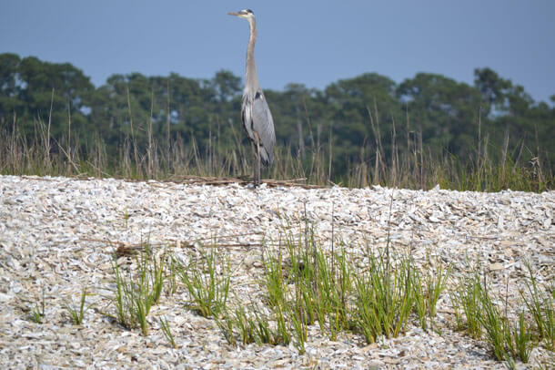 Hilton Head Island is a haven for wildlife