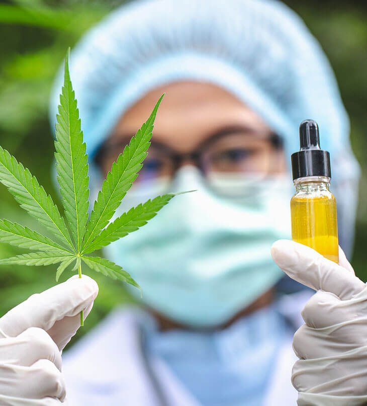 CBD hemp oil and cannabis leaves are in the hands of a doctor or researcher