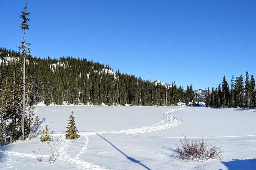 A scenic winter landscape view of cross country skii trackers on top of a frozen lake covered in snow and surrounded by evergreen forest in the Kootenays